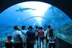 新加坡- 2016年4月13日:S的未认出的访客 e 一种水色 免版税库存照片