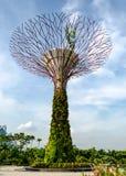 新加坡- 2014年4月28日:Supertree在滨海湾公园 库存图片