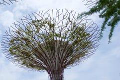 新加坡- 2016年7月23日, :Supertree树丛的天视图滨海湾公园的 跨过101公顷和五 免版税库存照片
