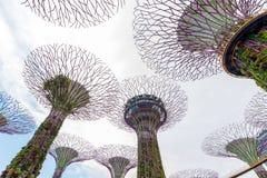 新加坡- 2017年2月14日:在滨海湾公园的Supertrees 免版税图库摄影