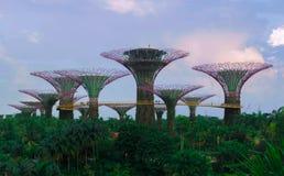 新加坡- 2017年3月29日:Supertree树丛是标志  免版税库存照片