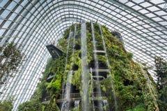新加坡- 1月15 :Supertree树丛夜视图庭院的 免版税库存图片