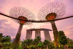 新加坡- 3月19 :Supertree树丛的夜视图在加尔德角 库存照片