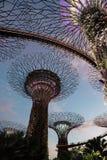 新加坡-行军, 2016年 在日落的超级树在滨海湾公园在新加坡, 2016年3月 库存照片