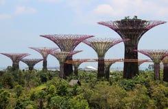新加坡Supertrees 免版税库存照片