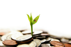 新增长的货币 库存照片