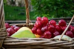 新夏天水多的果子 苹果、梨和葡萄五颜六色的家庭收获在藤做的一个柳条筐 免版税库存照片
