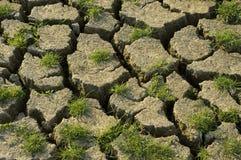 新天旱的生活 免版税库存照片