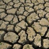 新天旱的生活 免版税图库摄影
