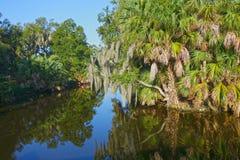 新奥尔良多沼泽的支流 免版税库存照片