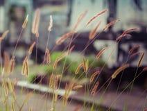 新奥尔良拉斐特公墓门 库存照片