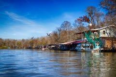 新奥尔良沼泽 免版税图库摄影