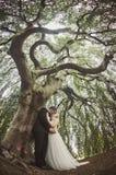 新娘和新郎亲吻里面柳树 免版税库存图片