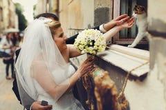 新娘和新郎使用与在窗台安装的猫 免版税库存图片