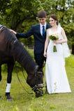新娘和新郎在公园站立在马附近,婚姻步行 白色礼服,愉快的加上动物 绿色背景 免版税图库摄影