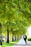 新娘和新郎在自然公园 库存照片