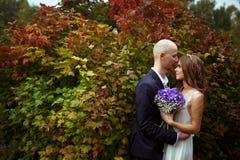 新娘和新郎拥抱在大红色灌木的身分 库存图片