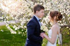 新娘和新郎看彼此在开花的春天庭院里 免版税库存图片