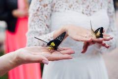 新娘在手上拿着一只蝴蝶 免版税库存照片