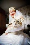 新娘猫现有量 图库摄影