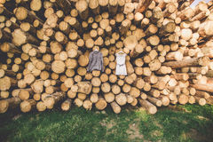 新娘` s礼服在垂悬树 免版税库存图片