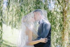 新婚佳偶亲吻在背景杨柳的面纱下 免版税库存图片