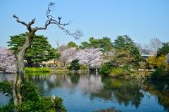 新宿公园#1 免版税库存图片