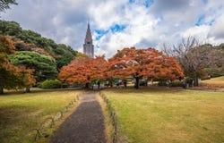 新宿Gyoen公园在秋天,东京,日本 免版税图库摄影