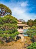 新宿Gyoen公园,东京,日本在春天 免版税库存图片