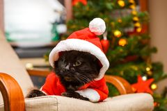 新年在圣诞老人` s服装的` s猫照片  库存照片