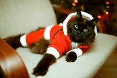 新年在圣诞老人` s服装的` s猫照片  免版税库存照片