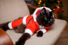 新年在圣诞老人` s服装的` s猫照片  免版税图库摄影