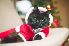 新年在圣诞老人` s服装的` s猫照片  免版税库存图片