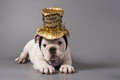 新年好英国牛头犬小狗 免版税图库摄影