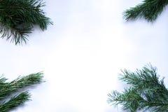新年度`s背景 在白色背景的圣诞树分支 库存照片