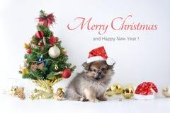 新年快乐,圣诞节,狗在圣诞老人帽子、庆祝球和其他装饰 免版税库存图片