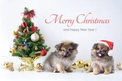 新年快乐,圣诞节,狗在圣诞老人帽子、庆祝球和其他装饰 图库摄影