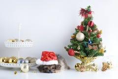 新年快乐,圣诞节,狗在圣诞老人帽子、庆祝球和其他装饰 免版税图库摄影