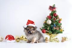 新年快乐,圣诞节,狗在圣诞老人帽子、庆祝球和其他装饰 库存照片