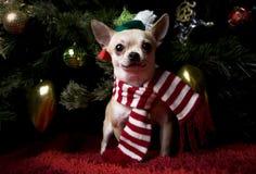 新年快乐2018年在帽子圣诞节雪的奇瓦瓦狗小狗 免版税库存图片