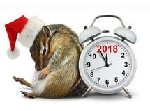 2018新年概念,在红色圣诞老人帽子的滑稽的花栗鼠有时钟的 免版税库存照片