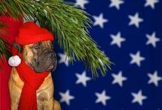 新年,圣诞节,圣诞老人在狗的该年在美国的旗子的背景的 S特写镜头画象  库存照片
