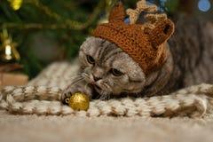 新年,在鹿帽子的英国圣诞节猫,圣诞树和光的背景的鲁道夫 库存照片