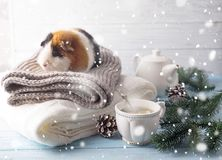 新年` s前夕仓鼠用茶和圣诞树 库存图片