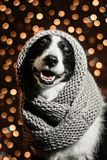 新年` s博德牧羊犬狗的童话画象 免版税库存照片