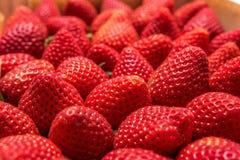 新成熟草莓关闭 最小的夏天食物概念 免版税库存图片