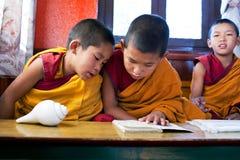 新手修士,尼泊尔 免版税库存图片