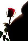 新拉丁孕妇剪影有玫瑰关闭的 免版税库存照片