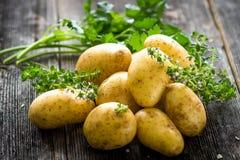 新新鲜的土豆 免版税库存图片