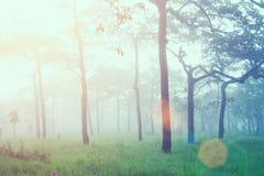 新日出软的焦点在有太阳火光的森林里 葡萄酒fi 免版税库存照片